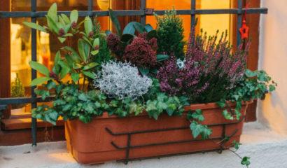 balcone-autunno-inverno-vaso